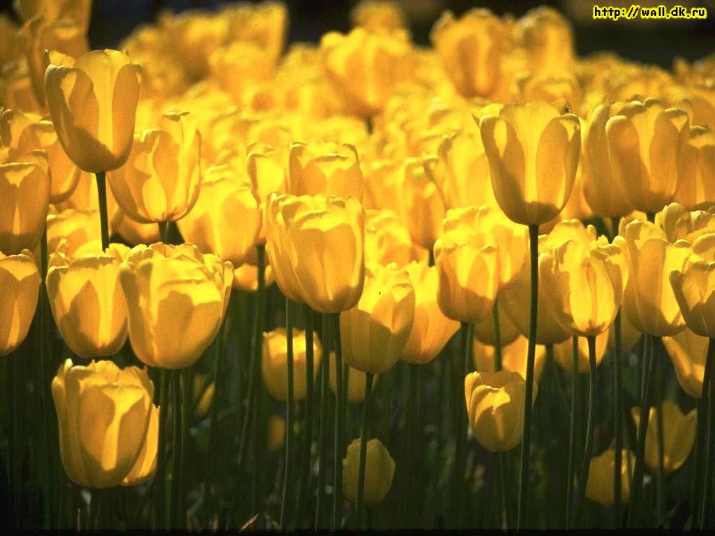 Интересные картинки цветов 7